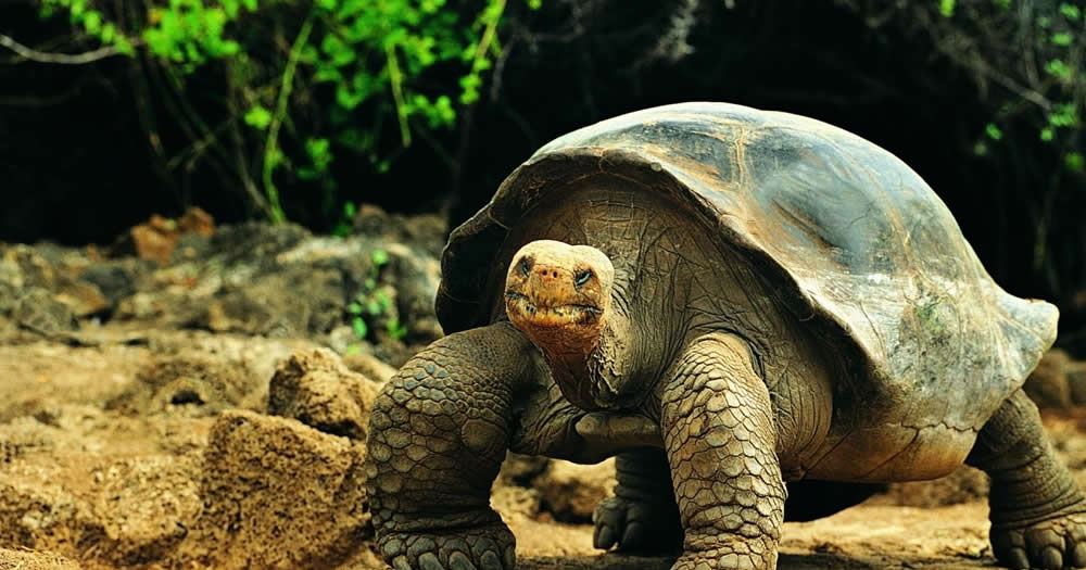Galapagos grande